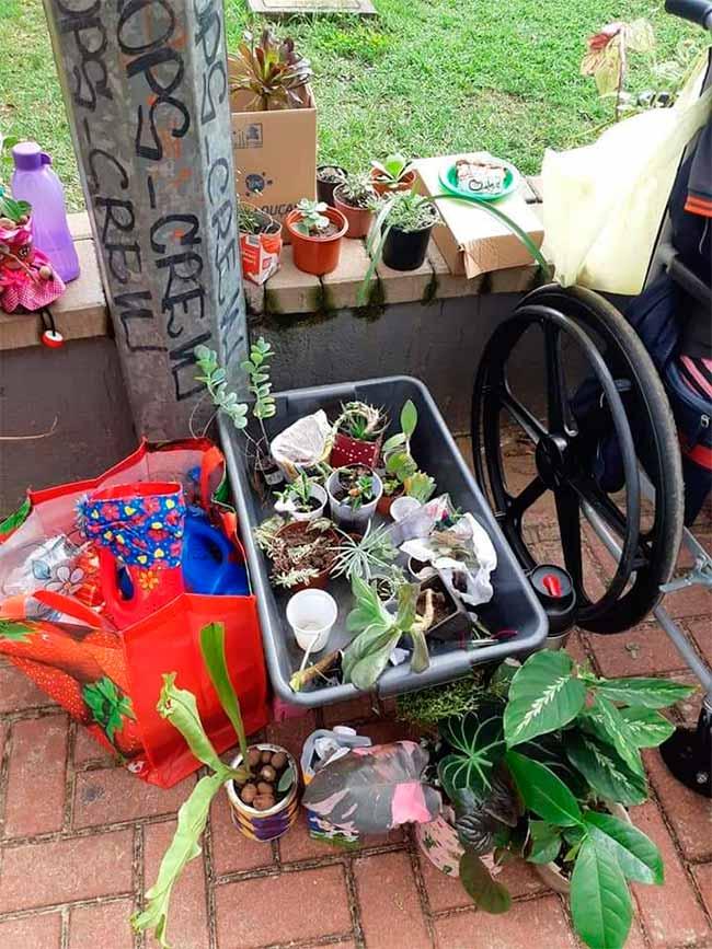 plantas sl - Trocas e doações de plantas na Praça Amadeo Rossi neste sábado