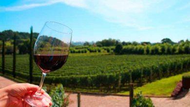 vinho 7 390x220 - Bento Gonçalves prepara atividades para o Dia do Vinho Brasileiro