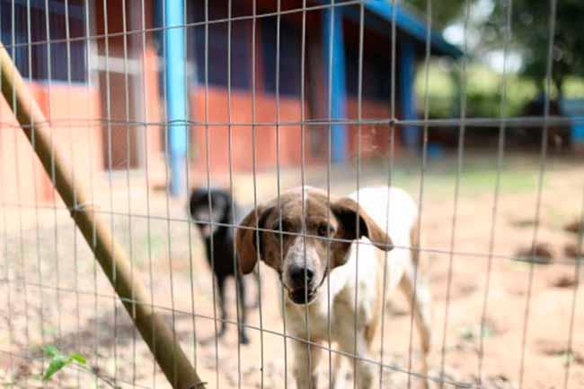 Campo Bom inaugura sábado um novo espaço de bem estar animal - Campo Bom inaugura sábado novo espaço para animais de rua