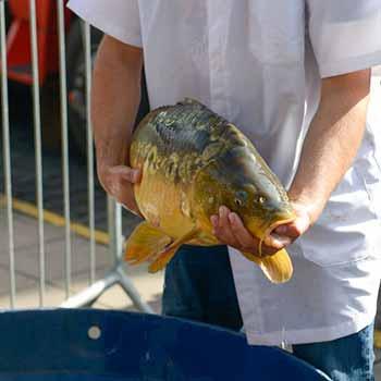 Feira do Peixe Vivo Caxias do Sul 1 - Feira do Peixe Vivo comercializa 350 quilos na edição do mês de junho