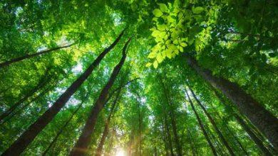 Semana do Meio Ambiente terá atividades em Balneário Camboriú 2 390x220 - Semana do Meio Ambiente terá atividades em Balneário Camboriú e Camboriú
