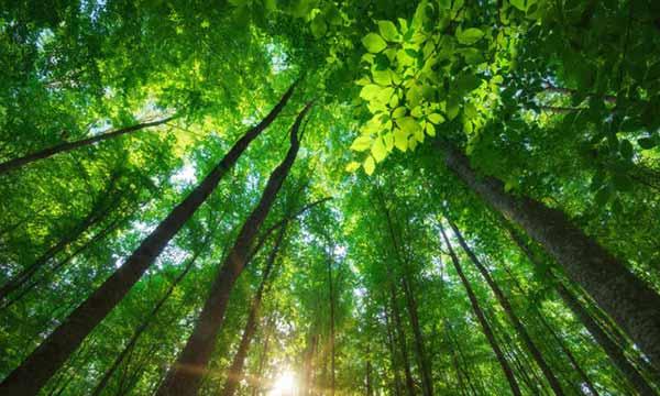 Semana do Meio Ambiente terá atividades em Balneário Camboriú 2 - Semana do Meio Ambiente terá atividades em Balneário Camboriú e Camboriú