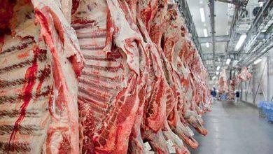 Photo of Exportações de carne podem ser recorde em 2019