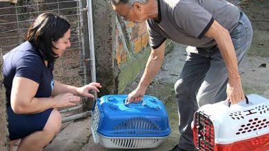 castração esteio 390x220 - Número de castrações de cães e gatos aumenta 26% em Esteio