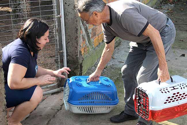 castração esteio - Número de castrações de cães e gatos aumenta 26% em Esteio
