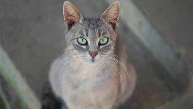 cati 390x220 - Toxoplasmose: como proteger os gatos da doença