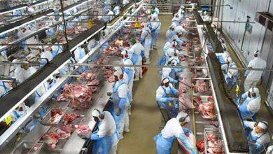 dalia frigorífico  foto Carina Marques Arquivo 390x220 - Suinofest coloca em evidência a importância do setor e o consumo da carne suína