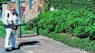 dengue poa 390x220 - Porto Alegre contabiliza 354 casos de dengue