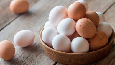 ovo 390x220 - Fósforo é um nutriente essencial para a saúde