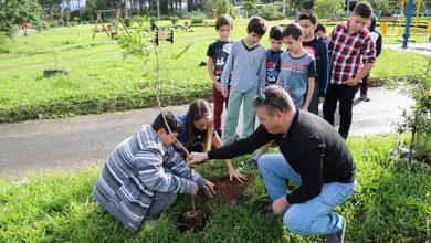 plantio de árvore em Sapiranga 1 390x220 - Semana do Meio Ambiente inicia com plantio de árvore em Sapiranga