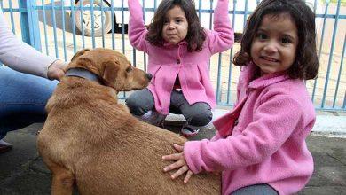 AdotantesCaesCanil 004 390x220 - Visita aos cães adotados do Canil Municipal de Esteio