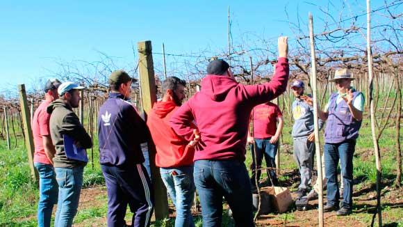 Curso de Profissionalização de Viticultores 4 - Jovens viticultores recebem curso profissionalizante em Bento Gonçalves