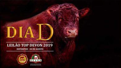 DiaD raça Devon 390x220 - Última semana de inscrições para raça Devon na Expointer 2019