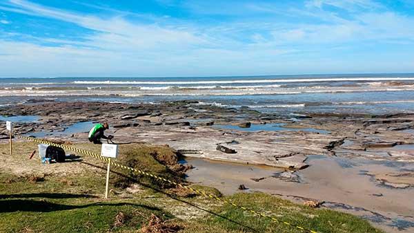 Lobo Marinho 2 - Lobos e Leões Marinhos começam a ser avistados em Torres, no litoral gaúcho
