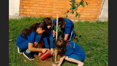 Plantio de mais de 20 árvores nativas 390x220 - Mais de 11 mil árvores já foram plantadas em Passo Fundo