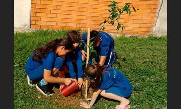 Plantio de mais de 20 árvores nativas - Mais de 11 mil árvores já foram plantadas em Passo Fundo