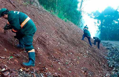 Plnatio de hortências em Gramado RS 2 - Gramado incentiva plantio de hortênsias no município