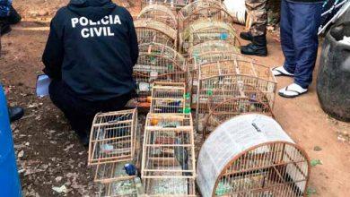 aves silvestres em Gravataí 390x220 - Polícia Civil faz apreensão aves silvestres em Gravataí