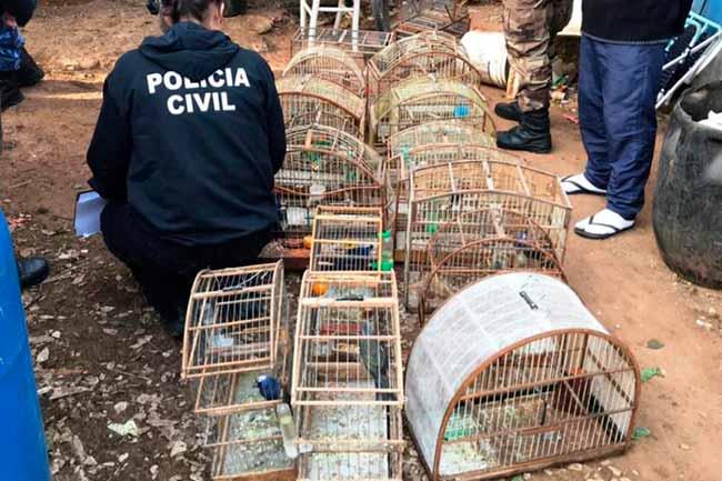 aves silvestres em Gravataí - Polícia Civil faz apreensão aves silvestres em Gravataí
