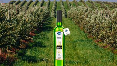 azeite2 390x220 - Azeite de oliva produzido em Vacaria é novidade no mercado