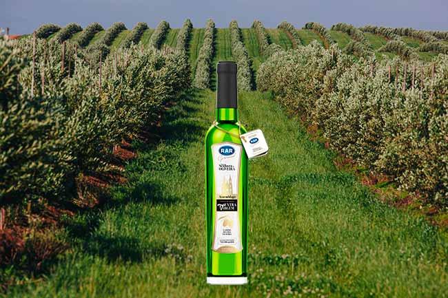 azeite2 - Azeite de oliva produzido em Vacaria é novidade no mercado