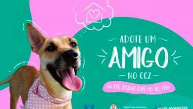 caescapao 390x220 - Capão da Canoa faz ação para adoção de animais neste sábado