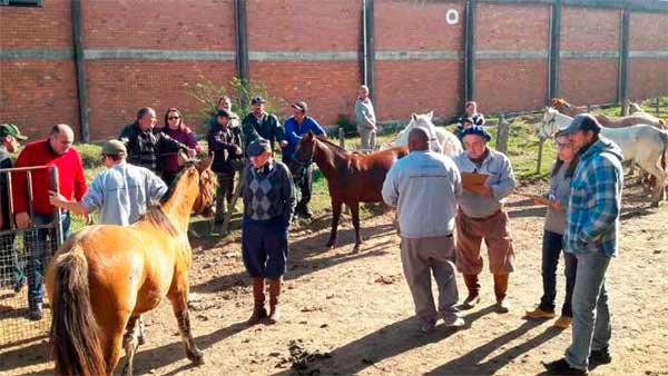 cavalos são adotados em Pelotas 1 - 16 Cavalos que sofriam maus-tratos foram adotados em Pelotas
