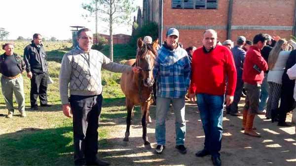 cavalos são adotados em Pelotas 2 - 16 Cavalos que sofriam maus-tratos foram adotados em Pelotas