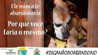 diga nao ao abandono 14953 390x220 - Veranópolis lança campanha contra o abandono de animais