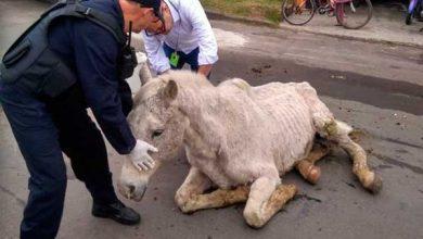 resgate de cavalo em Santa Maria RS 390x220 - Cavalo é resgatado com emprego de força-tarefa em Santa Maria