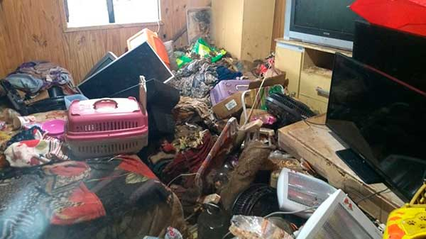 Acumuladora em Caxias do Sul RS 1 - Meio Ambiente resgata cães e gatos na casa de acumuladora em Caxias do Sul