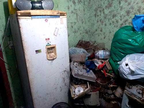 Acumuladora em Caxias do Sul RS 2 - Meio Ambiente resgata cães e gatos na casa de acumuladora em Caxias do Sul