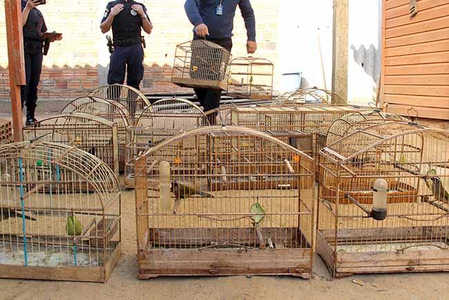 ApreensaoPassaros esteio - Fiscalização apreende 27 pássaros em Esteio