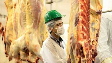 Diretor Técnico da ABCD Lucas Hax conferindo o primeiro abate 390x220 - Carne Devon Certificada chega ao mercado gaúcho