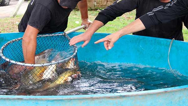 Feira do Peixe Vivo em Lajeado RS - Feira do Peixe Vivo ocorre nesta sexta-feira em Lajeado