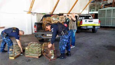 GDA faz apreensão de animais silvsetres 390x220 - Pássaros silvestres são apreendidos em São Leopoldo