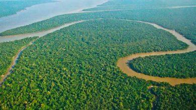 Photo of Governo anuncia liberação de R$ 38 milhões para a Amazônia