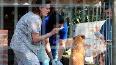 animais do Canil Municipal Caxias do Sul 2 390x220 - Semma vai vacinar mais de 800 cães em Caxias do Sul