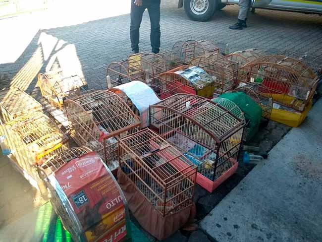 avescaxias - Semma resgata 29 aves silvestres em Caxias do Sul