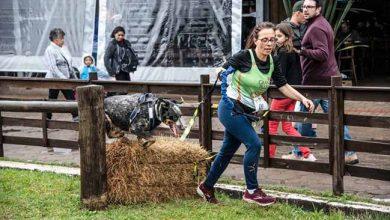 canicross 390x220 - Competição de cães foi atração na Expointer