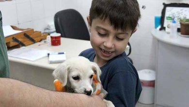 dogesteio2 390x220 - Mais um filhote recebeu novo lar em Esteio