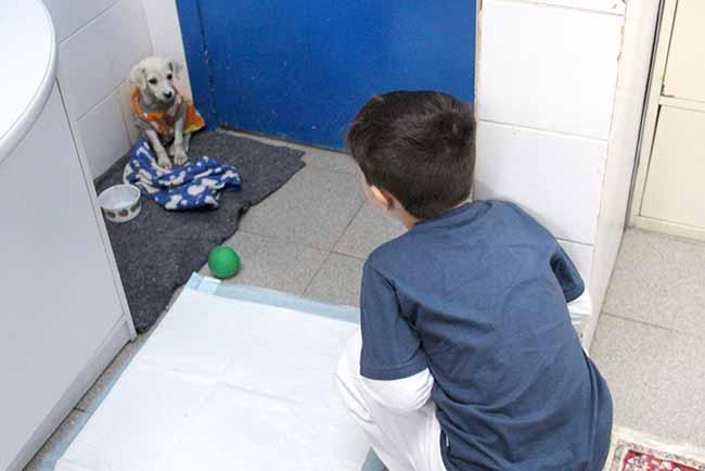 dogesteio3 - Mais um filhote recebeu novo lar em Esteio