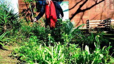 parqimp 390x220 - São Leopoldo faz levantamento de plantas alimentícias no Parque Imperatriz