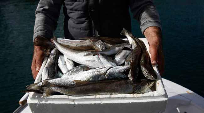 peix - Bento Gonçalves realiza sábado a tradicional Feira do Peixe Vivo