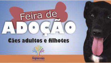 Adoção de animais 390x220 - Sapucaia do Sul realiza Feira de Adoção de Animais neste sábado
