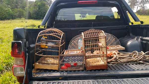 Resgate pássaros - Grupamento Ambiental resgata pássaros silvestres em São Leopoldo