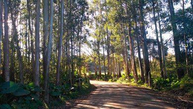 Photo of Caminhos de Lajeado tem caminhada inaugural neste domingo