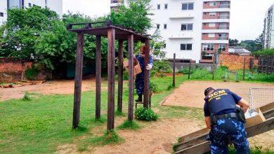 Photo of Abelhas são removidas da Escola Gusmão Britto em São Leopoldo