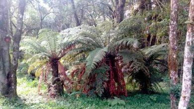 Photo of Flores da Cunha: Parque Natural São Francisco de Assis comemora 10 anos