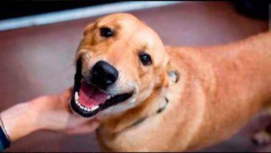 Photo of Vacaria inicia programa de castração de cães de rua